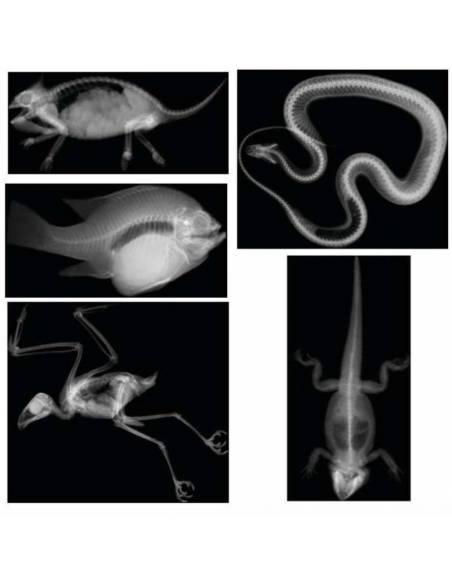 Radiografías animales  Animales y Naturaleza