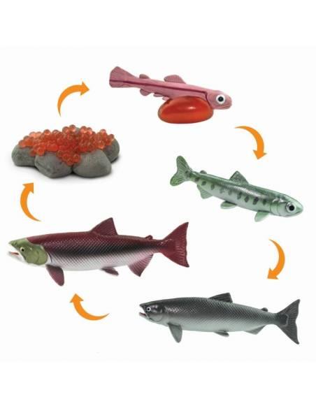 Ciclo de vida salmón safari