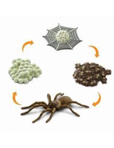 Ciclo de vida araña