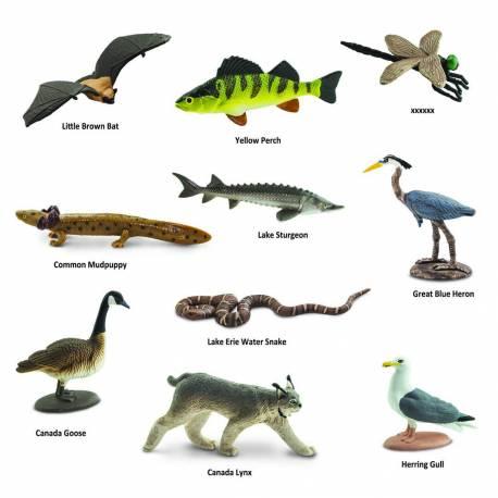 Grandes lagos  Toobs Animales