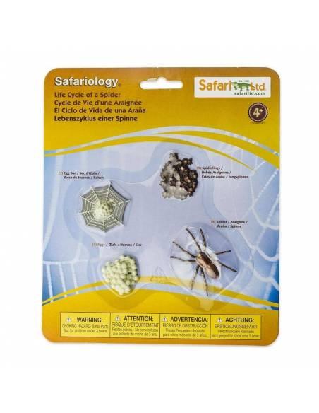 100406 ciclo de la vida de araña safari