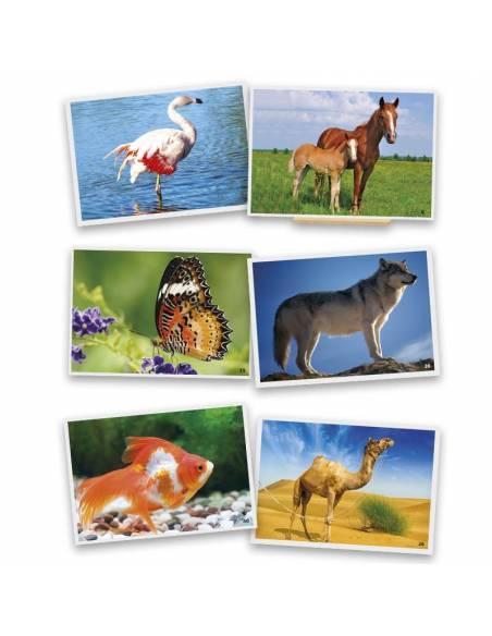 Fotografías de animales  Lenguaje