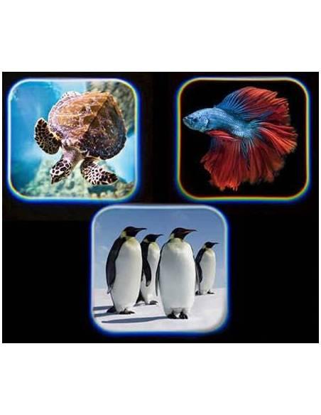 Linterna Proyector Animales del Mar  Linternas Proyector