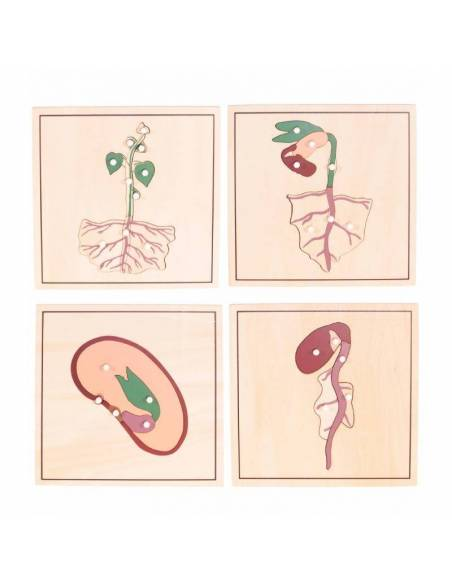 Pack 4 puzles - crecimiento Semilla  Botánica y Zoología