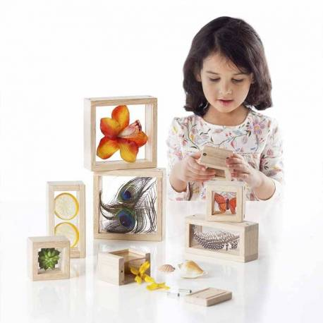 Bloques de madera transparentes para tesoros  Fósiles y minerales
