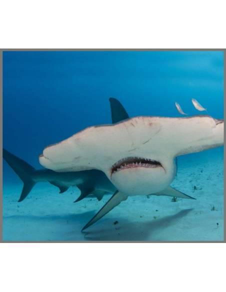 Linterna Tiburones  Linternas Proyector