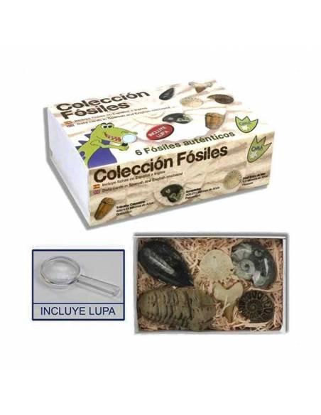 Colección Fosiles en estuche  Fósiles y minerales