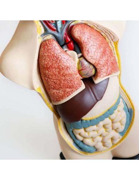 Set de Anatomía en Maqueta  Ciencia y medio ambiente