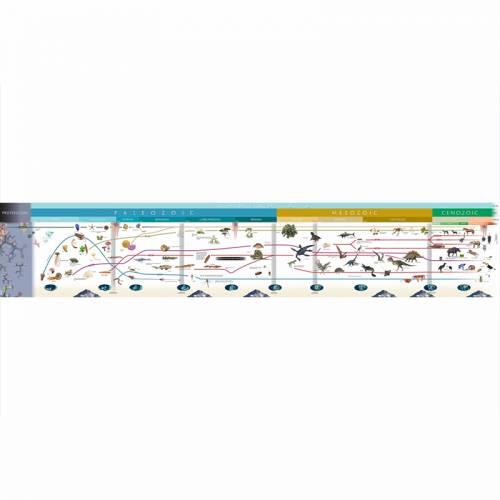 Timeline Of Life  Educación Cósmica