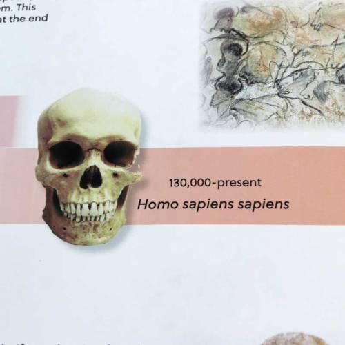 Timeline Of Early Humans  Educación Cósmica