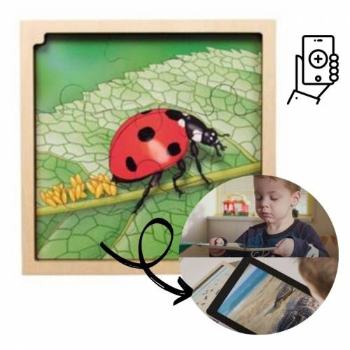 Puzzle Realidad Aumentada - Ciclo de la Mariquita  Puzles