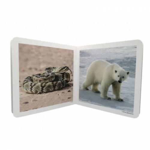 Cuento Imágenes reales - Animales Salvajes 2  Libros con Imágenes Reales