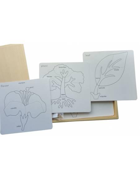 Actividades de botánica  Botánica y Zoología