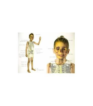 Láminas Cuerpo Humano