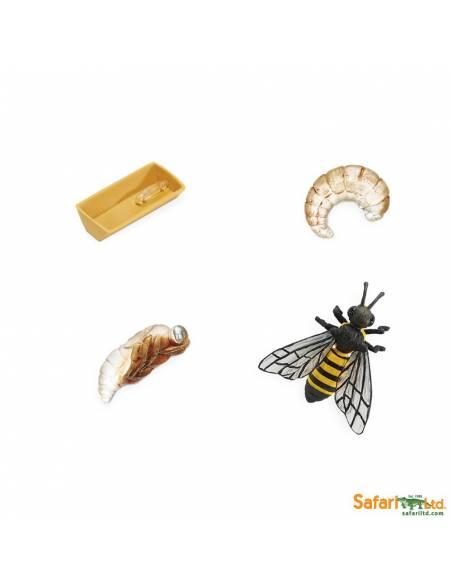 Ciclo de vida de la abeja
