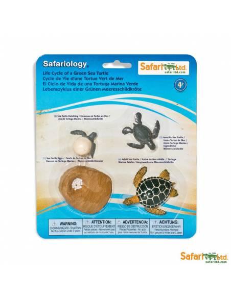 Ciclo de vida de la tortuga de mar