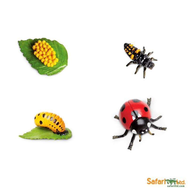 1313 Ciclo De Vida De La Mariquita on Grasshopper Life Cycle