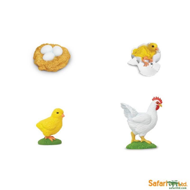 > EDUCATIVOS > Safari LTD - Miniaturas > Ciclo de vida de la gallina