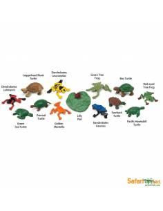 Ranas y tortugas