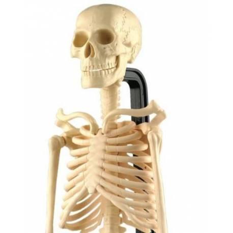 Esqueleto humano (46 cm) - Montessori para todos