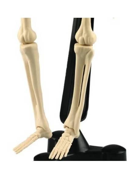 Esqueleto humano (46 cm)