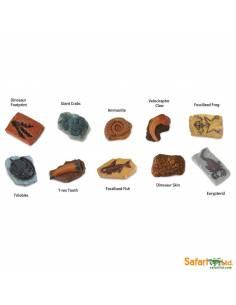Fósiles antiguos