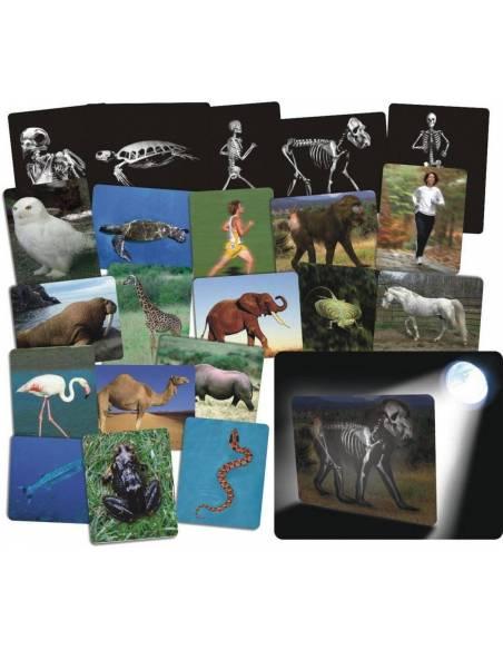 Qué hay dentro de los animales?  Ciencia y medio ambiente