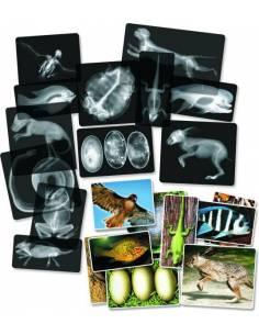 Radiografías animales