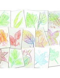 Plantillas de hojas