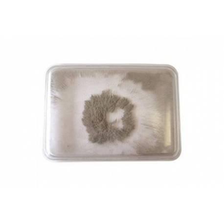 Caja Polvos de hierro  Física y Experimentos
