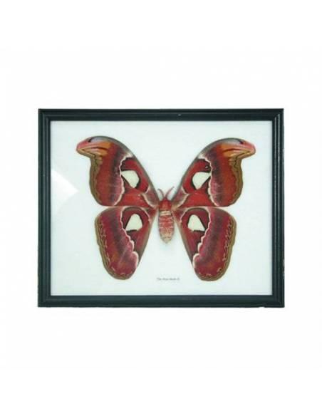 Marco con mariposa  Botánica y Zoología