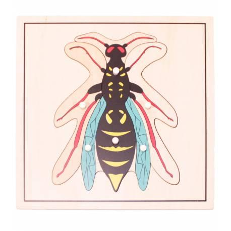 Puzle madera - Avispa  Botánica y Zoología