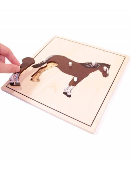 Puzle Caballo (con esqueleto)  Material Montessori