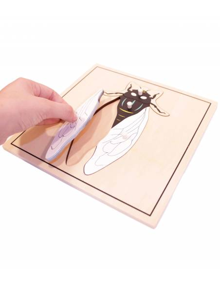 Puzle de madera - Mosca  Botánica y Zoología