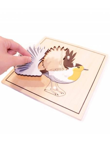 Puzle Pájaro (con esqueleto)  Botánica y Zoología
