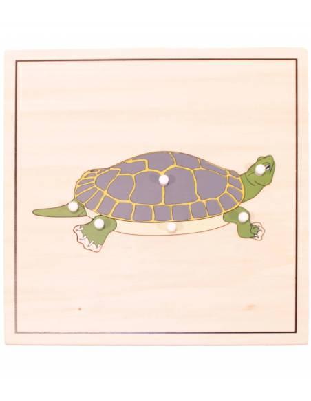 Puzle Tortuga (con esqueleto)  Botánica y Zoología