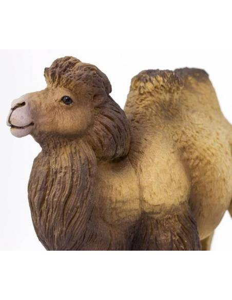 Camello bactriano  Animales Grandes