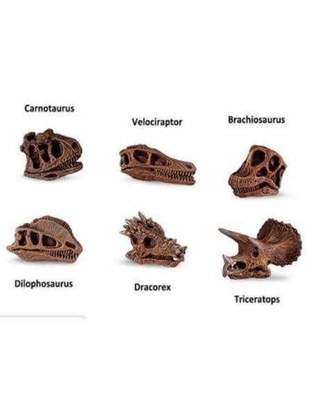 Cráneos de Dinosaurios  Toobs Conoce el mundo
