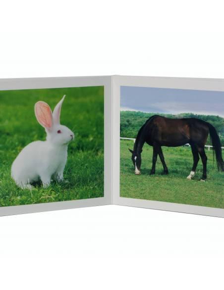 Cuento Imágenes Animales de la Granja Cartón  Libros para bebés