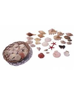 Cesta de conchas surtidas