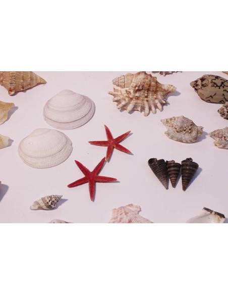 Cesta de conchas surtidas  Fósiles y minerales