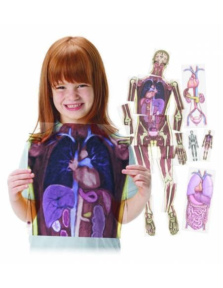 Resonancias magnéticas cuerpo humano  Cuerpo Humano y Alimentación