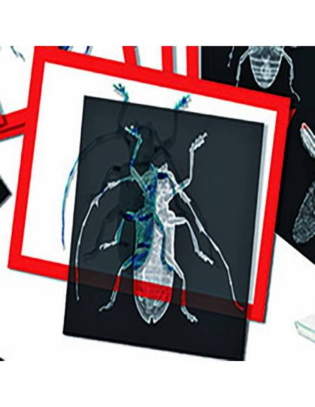 Rayos X insectos  Animales y Naturaleza