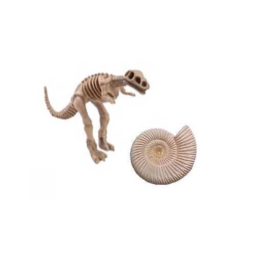 Fósiles y minerales