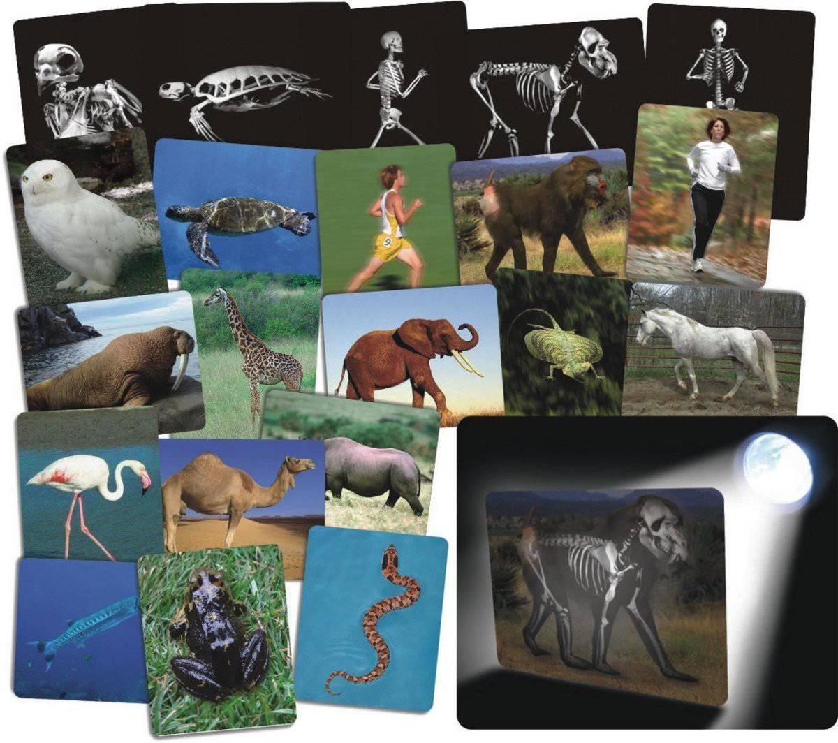 Qué hay dentro de los animales?