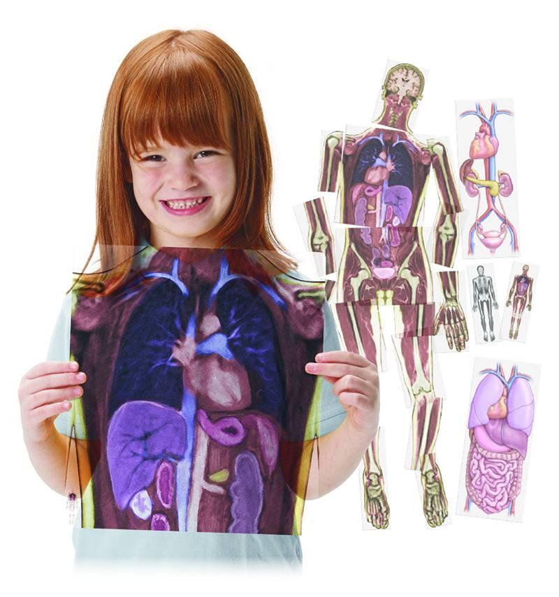 Resonancias magnéticas cuerpo humano